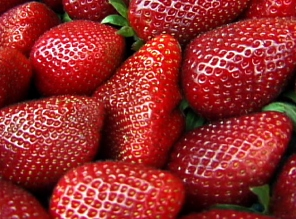 http://www.siegelproductions.ca/foodfiends/images/strawberry.jpg